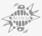 msns logo clienti scirocco multimedia